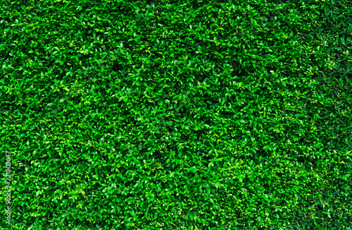 Natural Green Leaves Background Nature Wallpaper Eco Wall