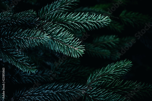 Fototapeta Christmas  Background with beautiful green pine tree brunch close up. Copy space.. obraz