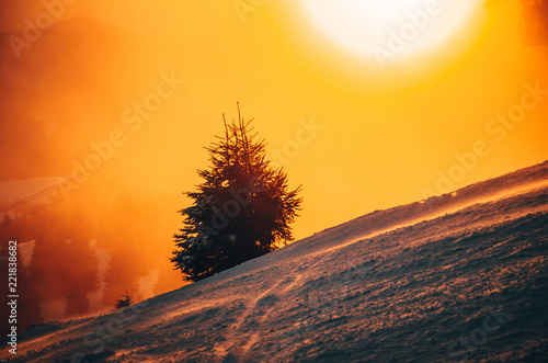 Spoed Foto op Canvas Natuur Silhouette of coniferous tree in winter nature. Orange sunset in background