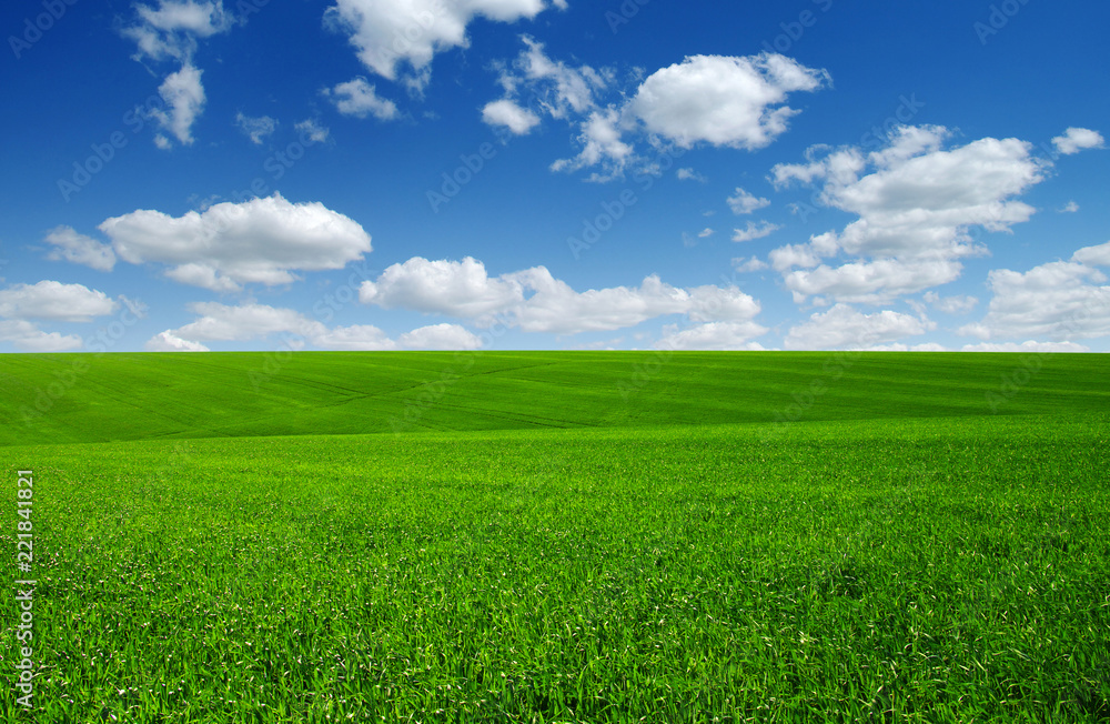 Fototapety, obrazy: green field and clouds