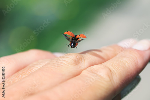 little beautiful ladybug flies up from the palm of a man spreading red wings