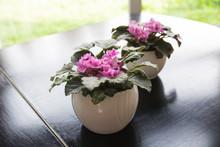 Pink Flower Of Violet