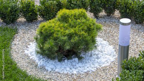 Photographie Modern garden design Coniferous plants in the garden