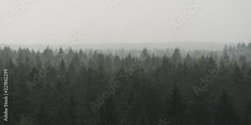Panoramic landscape view of spruce forest in the fog in the rainy weather