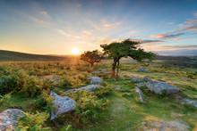 Sunset At Combestone On Dartmoor