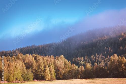 Deurstickers Blauw Foggy autumn forest view. Photo from Sotkamo, Finland.