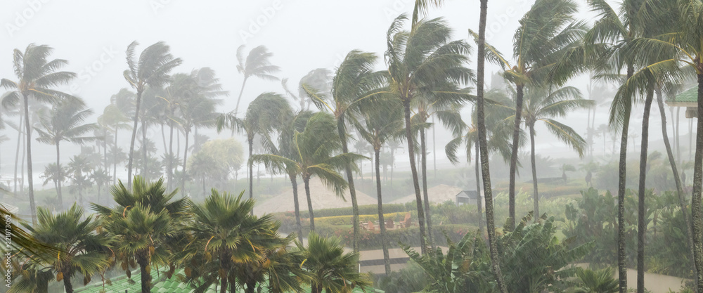 Fototapeta Palm trees blowing in the wind and rain as a hurricane approaches a tropical island coastline