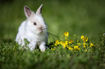 Cute bunny rabbit sitting on green grass in the garden.Animal nature background.