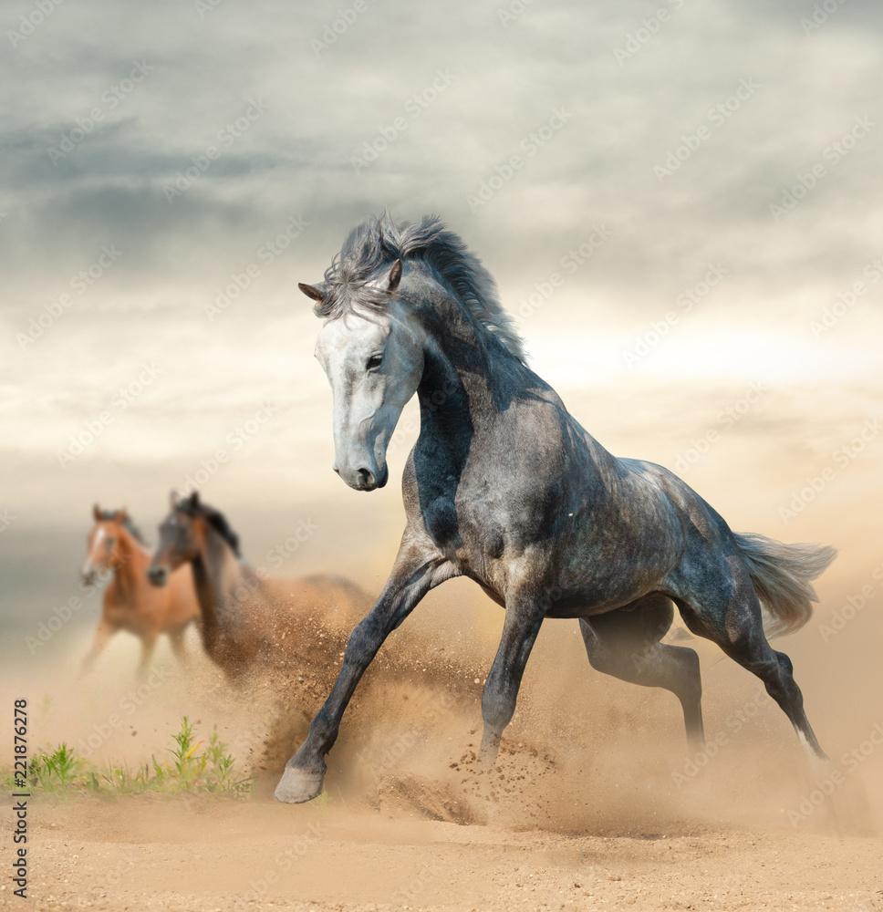Beautiful wild horses on freedom