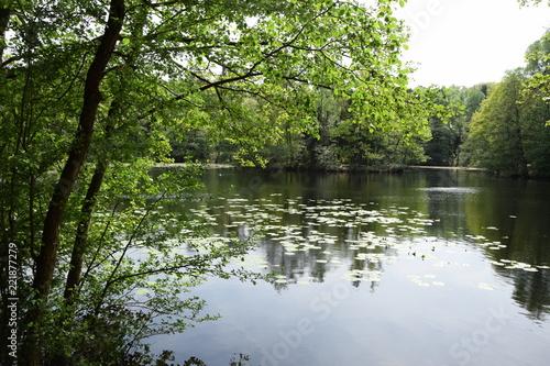 Kesselbruchweiher bei Frankfurt Fototapet