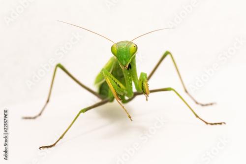 Photo praying mantis insect