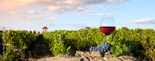 France > Anjou > Vigne > Verre de vin