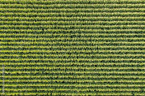 Carta da parati corn field aerial view