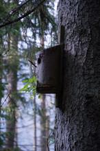 Budka Dla Ptaków W Dolinie Kościeliskiej