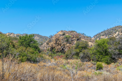 Foto op Aluminium Blauw Dead yucca plant flower stems in the dry early autumn California desert mountain sun