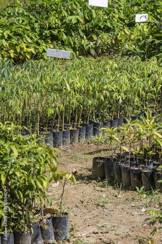 Plant nursery in REGUA Ecological Reserve, Rio de Janeiro, Brazil