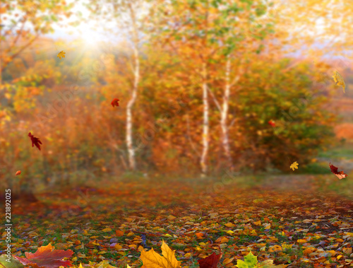 Spoed Fotobehang Meloen Autumn maple leaves .Beautiful autumn landscape with сolorful foliage. Falling leaves natural background