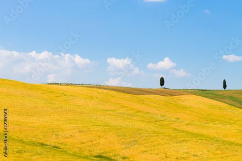 Staande foto Meloen Tuscany hills landscape, Italy