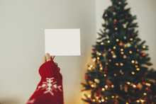 Hand Holding Empty Greeting Card On Background Of Golden Beautiful Christmas Tree With Lights In Festive Room. Christmas Template With Space For Text. Season's Greetings, Holidays