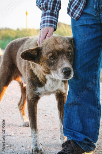 Foto  Lovely brown mongrel leaning against man's leg and being petted