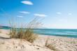 Grass on the sandy beach