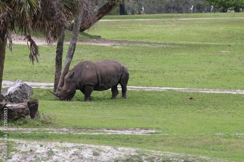 Foto op Aluminium Neushoorn Rhino