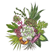 Flowers Bouquet. Floral Collection With Various Exotic Jungle Plants. Air Plant, Cactus, Succulent, Bromelia, Aloe Vera, Houseplant, Roses. For Wedding And Women Day Cards Design Purpose. Vector.