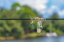 Fishing Line, Weights, Float/bobber Hooks Tangled In Power Line