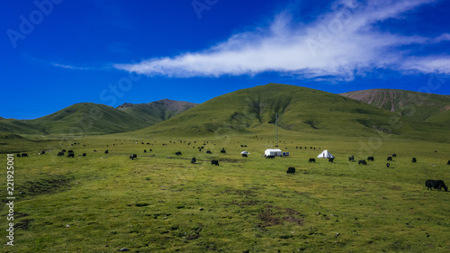Photo Yaks on meadows against mountains and sky in Qinghai, China