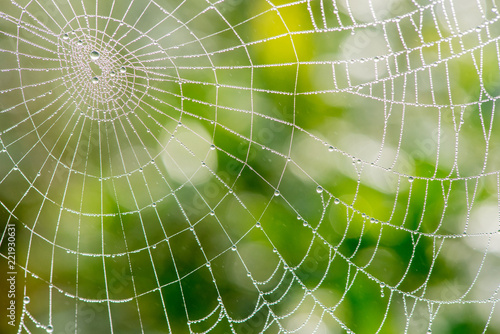 Light drops of dew on a beautiful web in the summer in a fog at dawn