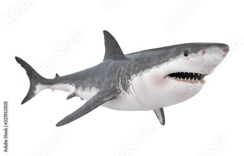 Fototapeta Great White Shark Isolated