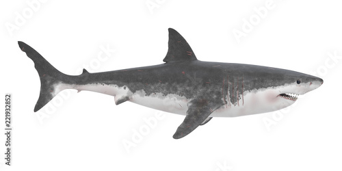 Fotografie, Obraz  Great White Shark Isolated