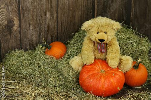 Fotografie, Obraz  pluszowy miś i halloweenowe dynie