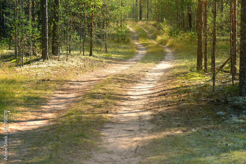 Foto op Canvas Weg in bos pine forest, moss and trunks of coniferous trees