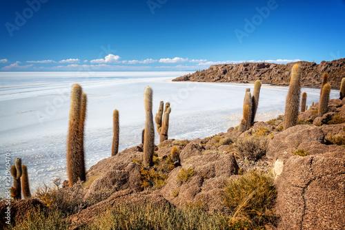 Spoed Foto op Canvas Centraal-Amerika Landen Cactuses in Incahuasi island, Salar de Uyuni salt flat, Potosi, Bolivia