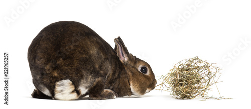 Rex Rabbit against white background