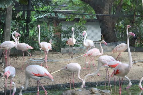 In de dag Flamingo Flamingo at the zoo