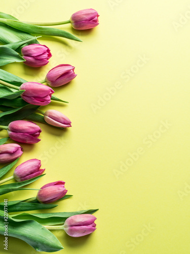 Delicate fresh tulips on yellow background.