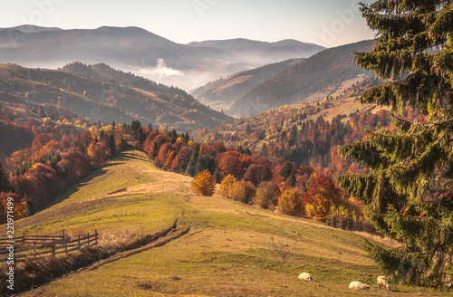 Poster Zwart Autumn in the Carpathian countryside