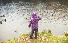 Little Girl Feeds Ducks, Rear View
