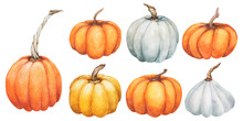 Pumpkin Set Collections. Watercolor Hand Painted Pumpkins For Halloween And Fall On White Background. Autumn Harvest. Vegetarian Raw Food