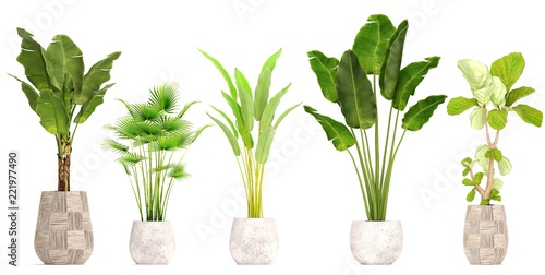 collection of ornamental plants in pots Wallpaper Mural