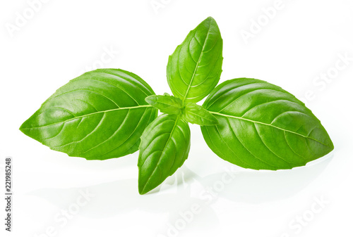 Fotomural  fresh green basil leaves isolated on white background
