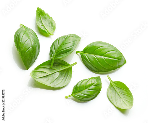 Fotografia fresh green basil leaves isolated on white background