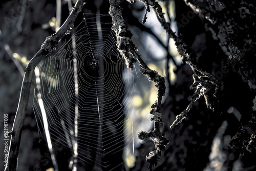 scary dark spieder web - Buy this stock photo and explore