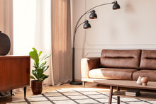 Black Lamp Next To Leather Sofa In Retro Living Room Interior With Plant Next To Cupboard. Real Photo