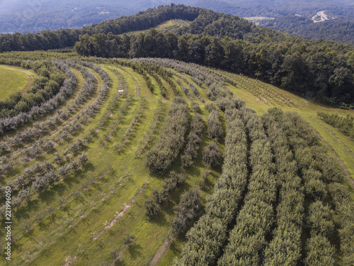 Aerial view of apple orchard near Saluda and Asheville, North Carolina.