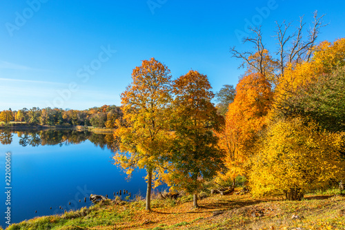 Fotografia, Obraz  Autumn scenery by a lake with trees
