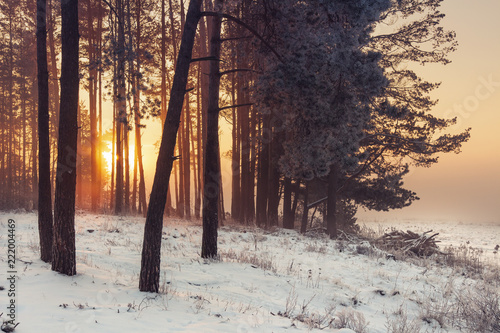 Winter forest at sunrise. Winter frosty nature landscape in warm sunlight. Christmas time.