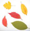 на ярком фоне лежат осенние листья фоновое изображение